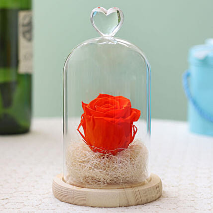 Forever Orange Flame Rose in Glass Dome: