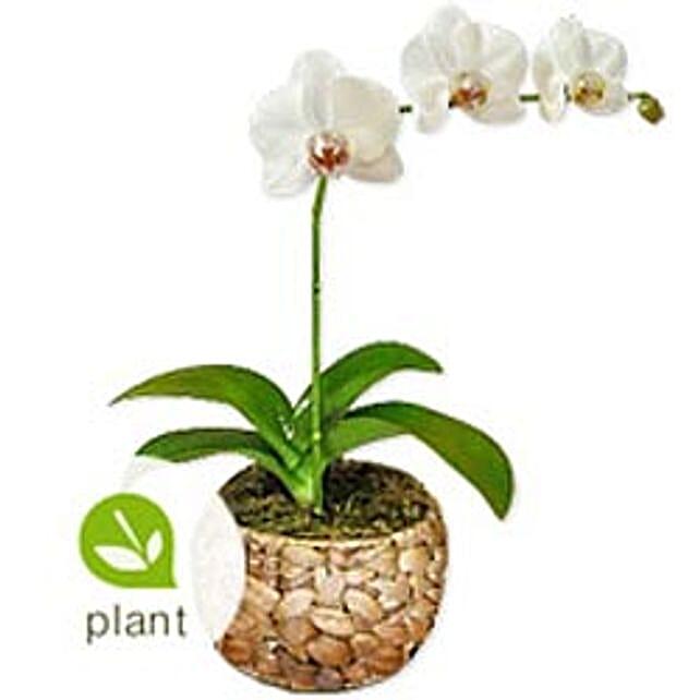 Cream BHRN: Plants in Bahrain
