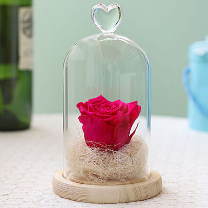 Forever Hot Pink Rose in Glass Dome: