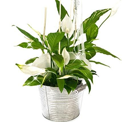 Peace Lily Bucket: Thank You