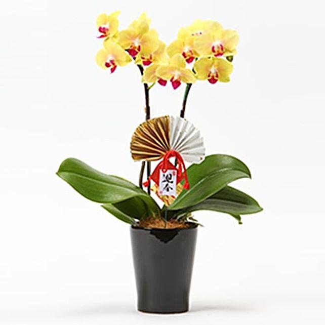 Middy Phalaenopsis For Christmas: Send Christmas Gifts to Japan