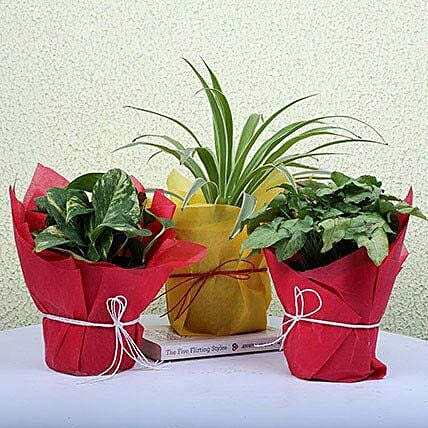 3 Green House Plants: Best Outdoor Plant