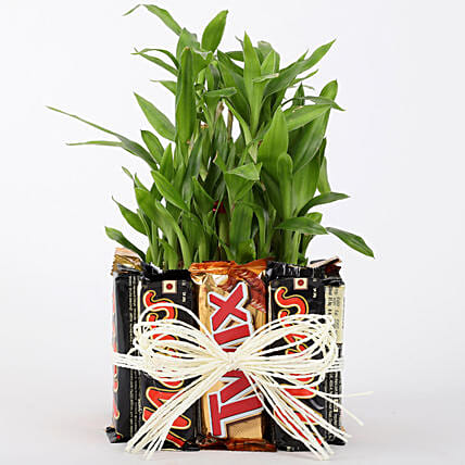 3 Layer Lucky Bamboo In Square Glass Vase With Chocolates: Desktop Plants