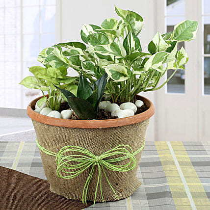 Air Purifying Dish Garden: Tropical Plants