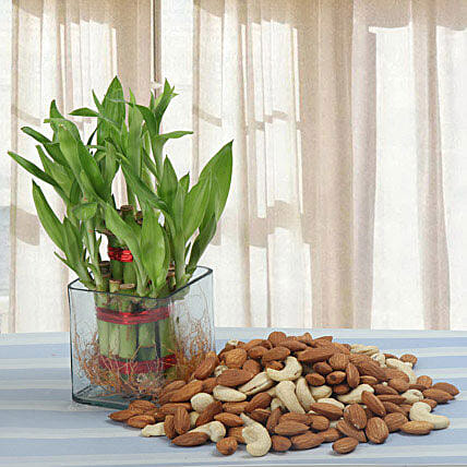 Alluring Gift: Send Lucky Bamboo for Diwali