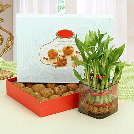 Besan Laddoo with Luck: Lucky Bamboo Plants