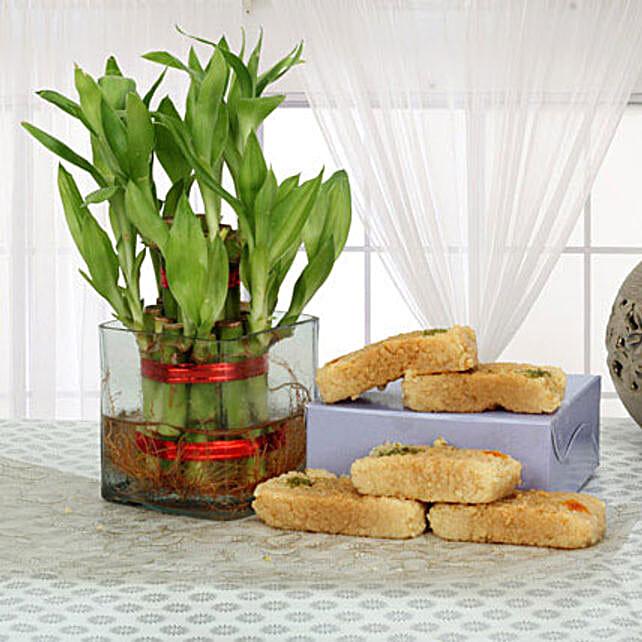 Bonanza Of Luck: Send Lucky Bamboo for Rakhi