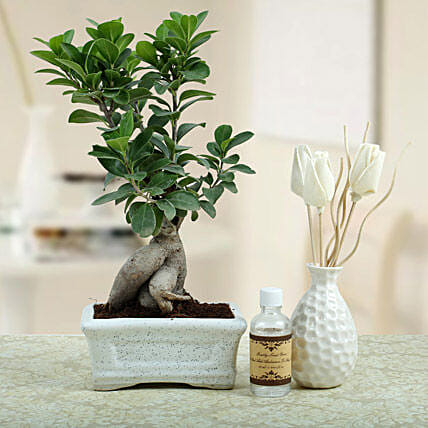 Bonsai N Oil Diffuser: Tropical Plant Gifts