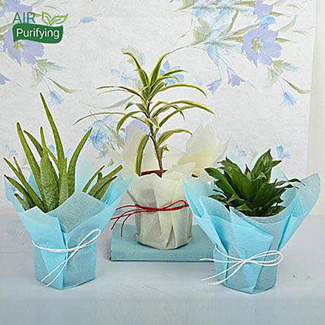 Bring Joy to Life Plants: Ugadi