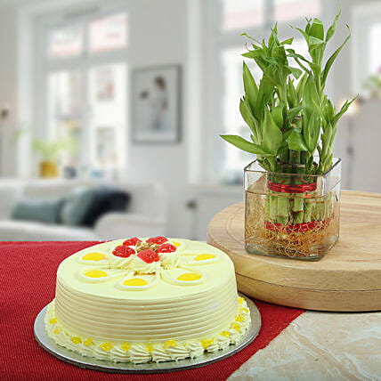 Butterscotch Cake With Bamboo Plant: Cakes N plants