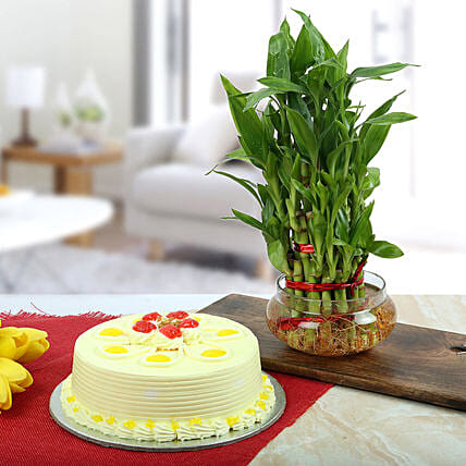 Butterscotch Cake With Three Layer Bamboo Plant: Butter Scotch Cakes