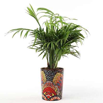 Chamaedorea Plant with Printed Ceramic Vase: Gift Ideas