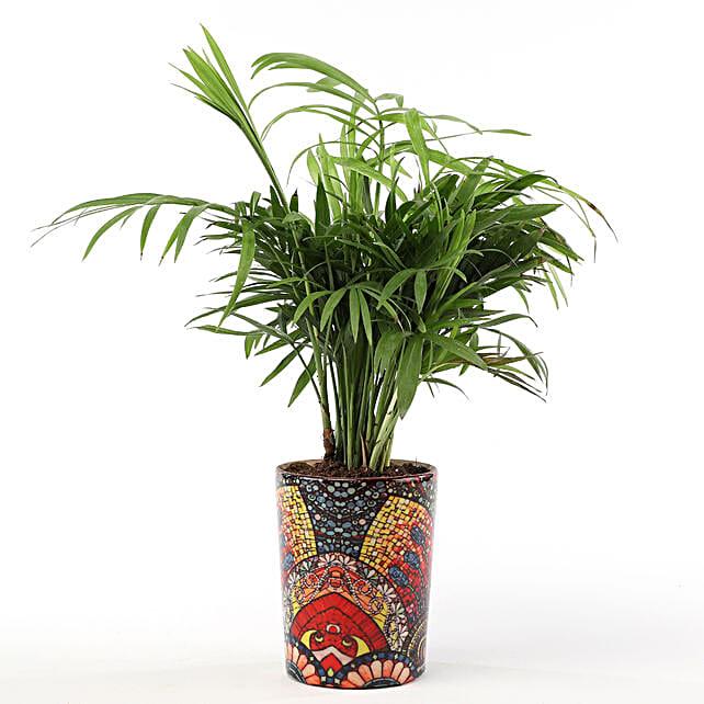 Chamaedorea Plant with Printed Ceramic Vase: Buy Indoor Plants
