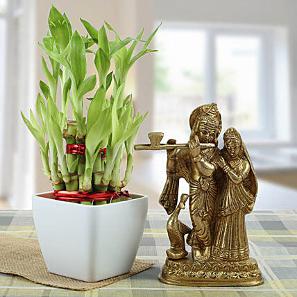 Eternal Bond: Lucky Bamboo Plants