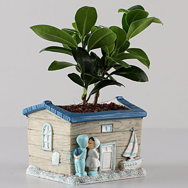 Ficus Compacta In Grey Seaside House Planter: Buy Indoor Plants