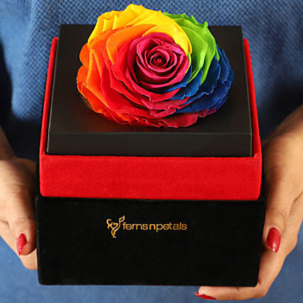 Big Forever Rainbow Rose in Black Velvet Box: