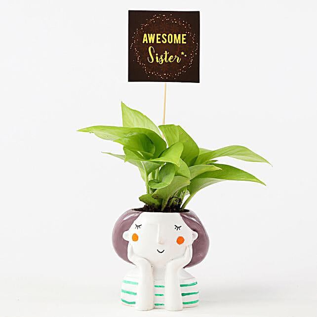 Golden Money Plant In Resin Pot For Sister: Money Plant