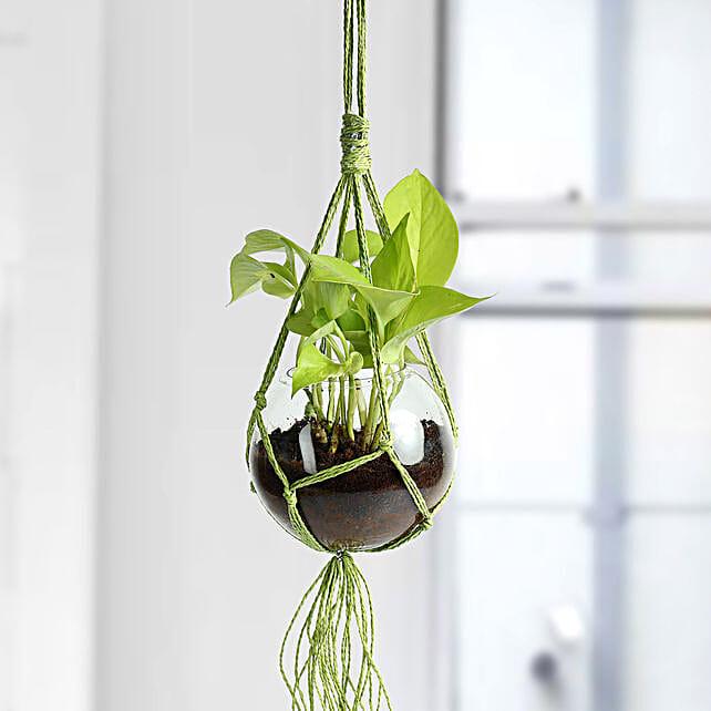 Golden Pothos Hanging Terrarium Plant: Hanging Plants
