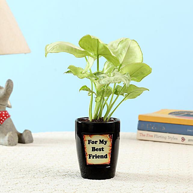 Golden Syngonium For Best Friend: Good Luck Plants - Friendship Day