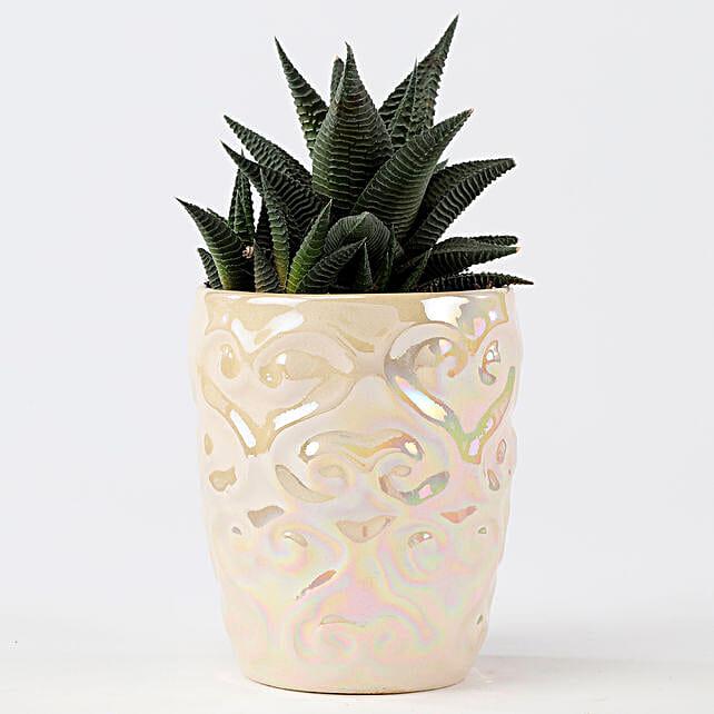 Haworthia In Metallic Finish Ceramic Pot: Exotic Plant Gifts