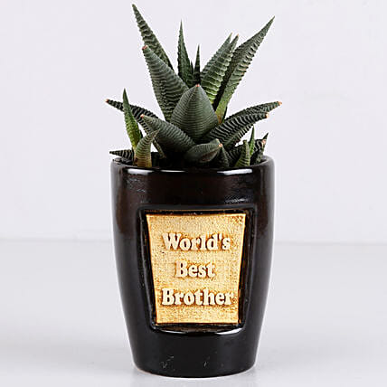 Haworthia Plant For Best Brother: Rare Plants