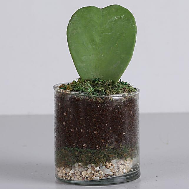 "Hoya Plant 3"" Glass Terrarium: Send Shrubs"