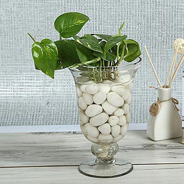 Intensifying Money Plant Terrarium: Send Spiritual Gifts