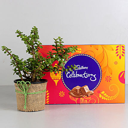 Jade Plant & Cadbury Celebrations Combo: Cadbury Chocolates