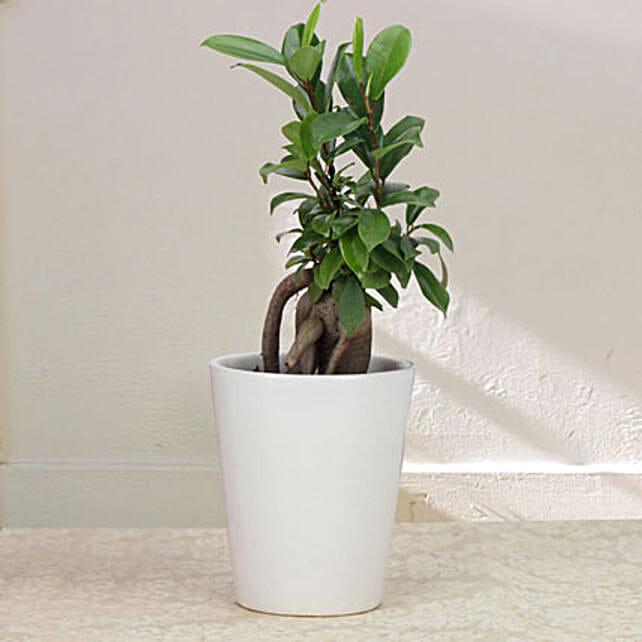 Keepsake Ficus: Hug Day Gifts