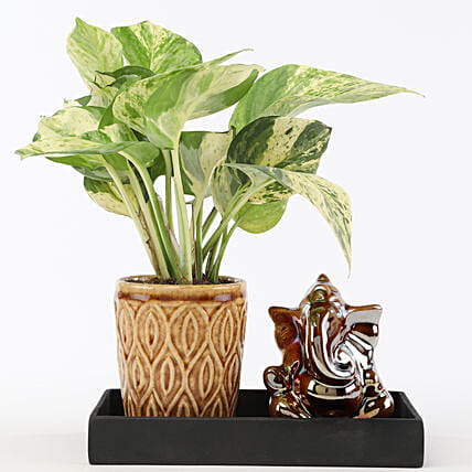 Marble Money Queen Plant In Ceramic Platter: Boss Day Gifts