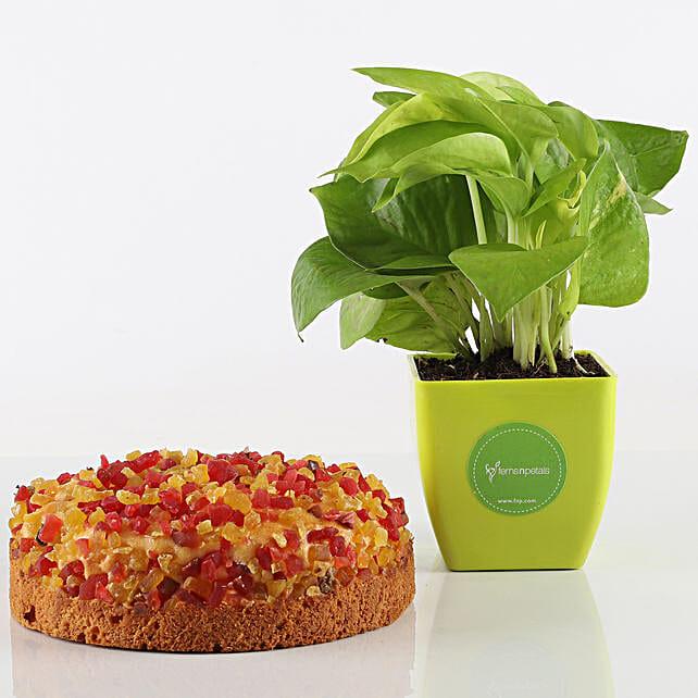 Mixed Fruit Dry Cake & Money Plant Combo: Combo Gifts