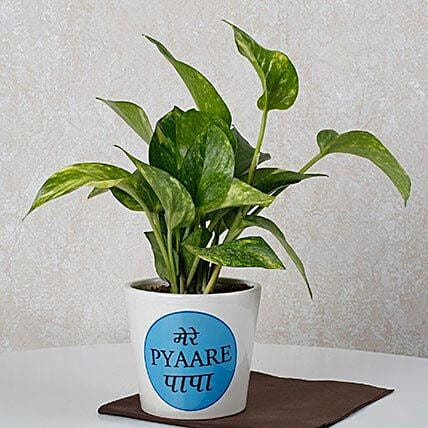 Money Plant For Dad: