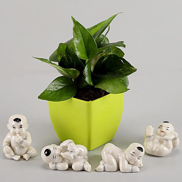 Money Plant in Green Pot & Baby Buddha Combo: