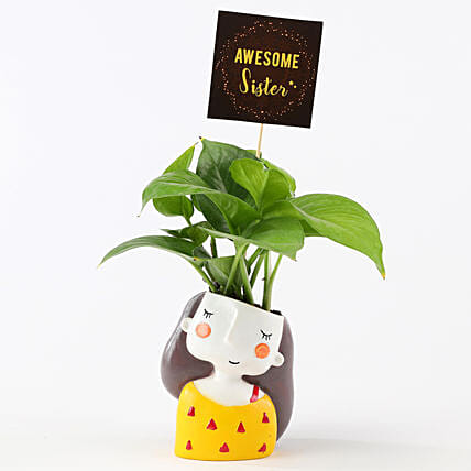 Money Plant In Yellow Pot For Sister: