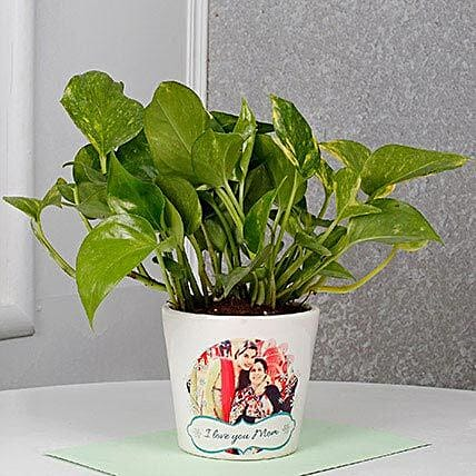 Mothers Day Special Money Plant: