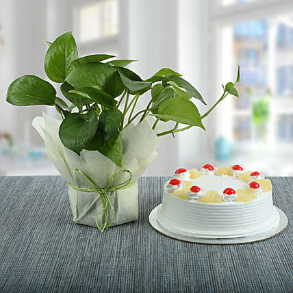 Pineapple Cake With Money Plant: