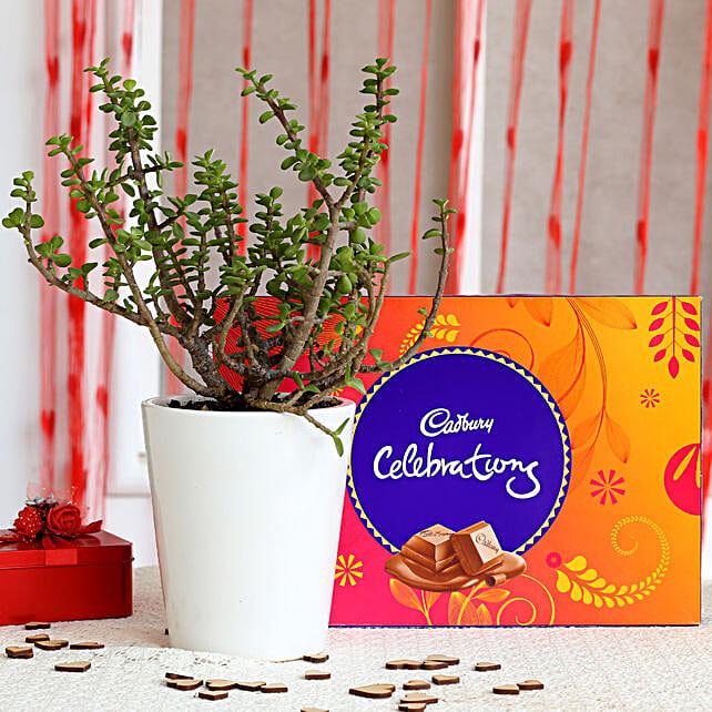 Potted Jade Plant & Cadbury Celebrations Combo: Cadbury Chocolates