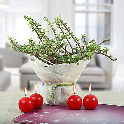 Red Candle Balls with Jade Plant: Candles