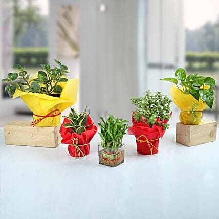 Set of 5 Fantastic Indoor Plants: Succulents and Cactus Plants