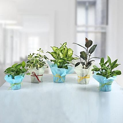 Set of 5 Refreshing Green Plants: Tropical Plant Gifts