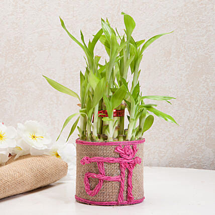 Sincerely Yours Mom Lucky Bamboo Plant Birthday Gifts For