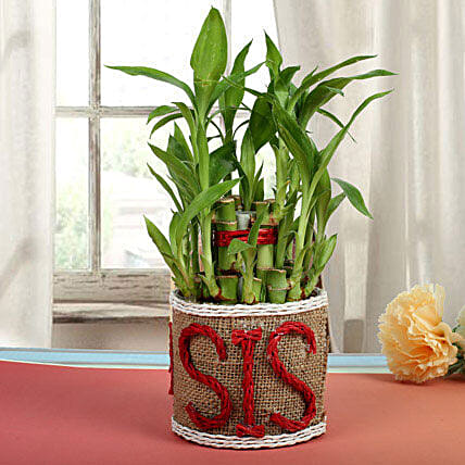 Special Bamboo In Jute Vase: Exotic Plants
