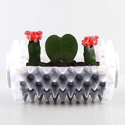 Succulents Combo In White Foldable Planter: Exotic Plants