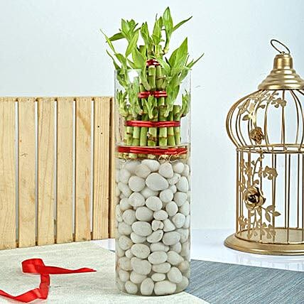 Three Layer Bamboo Decor Terrarium: Exotic Plant Gifts