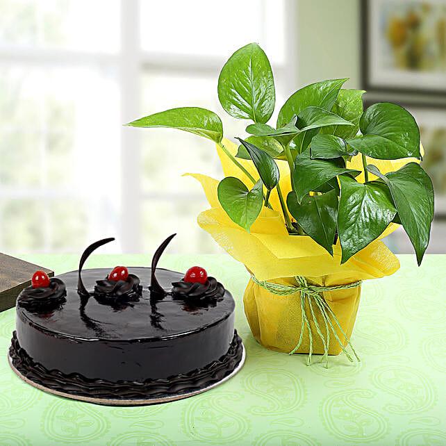 Truffle Cake With Money Plant: