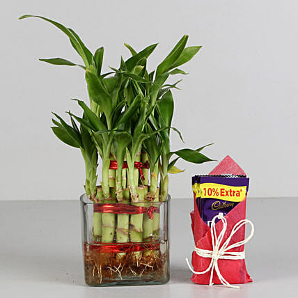 Two Layer Bamboo Plant & Cadbury Dairy Milk Chocolates: Gift Combos