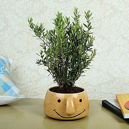 Unimus Plant In Smiley Vase: Send Shrubs