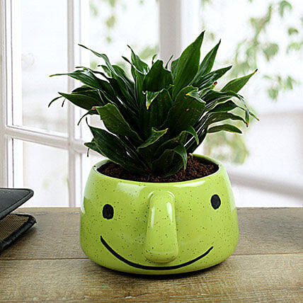Dracaena Compacta In Smiley Vase: Send Shrubs