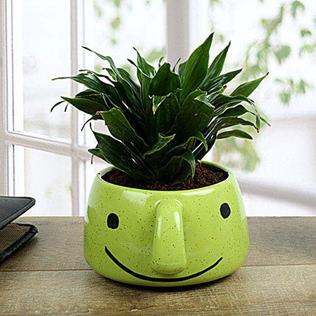 Dracaena Compacta In Smiley Vase: