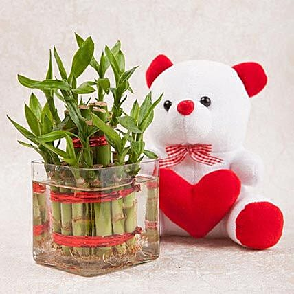 Luck N Cuteness Combo: Lucky Bamboo for Friendship Day